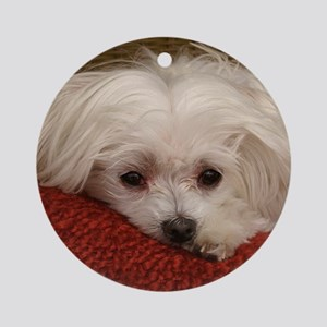 Cute Maltese Ornament (Round)