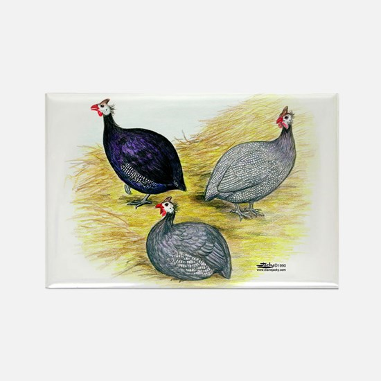 Guineas Purple, Coral Blue And Lavender Magnets