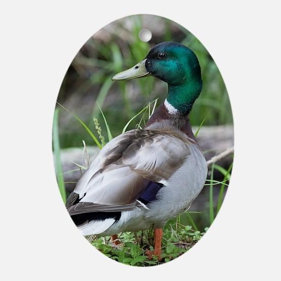 Mallard Duck Oval Ornament