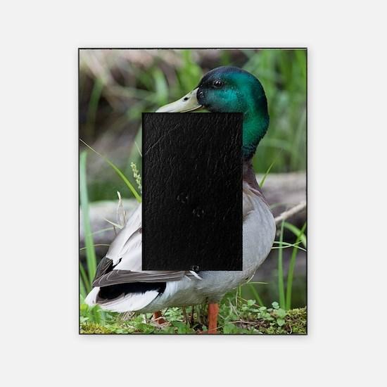Mallard Duck Picture Frame