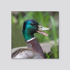 "Mallard Duck Square Sticker 3"" x 3"""