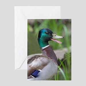 Mallard Duck Greeting Card