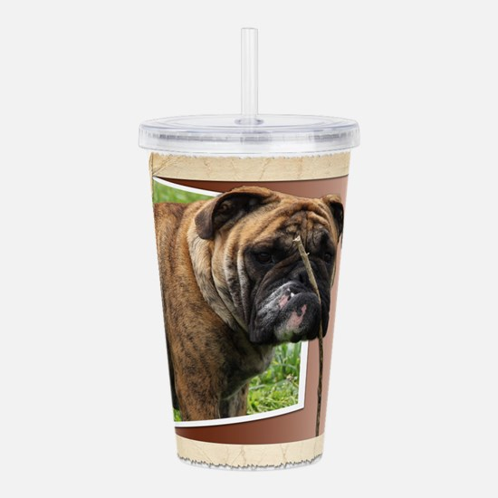 TumTum bulldog on rolled paper Acrylic Double-wall