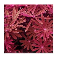 Red Flower Pattern Tile Coaster