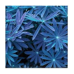 Beautiful Blue Tile Coaster