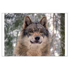 Wolf In Woods Large Poster