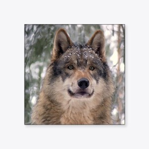 """Wolf in Woods Square Sticker 3"""" x 3"""""""