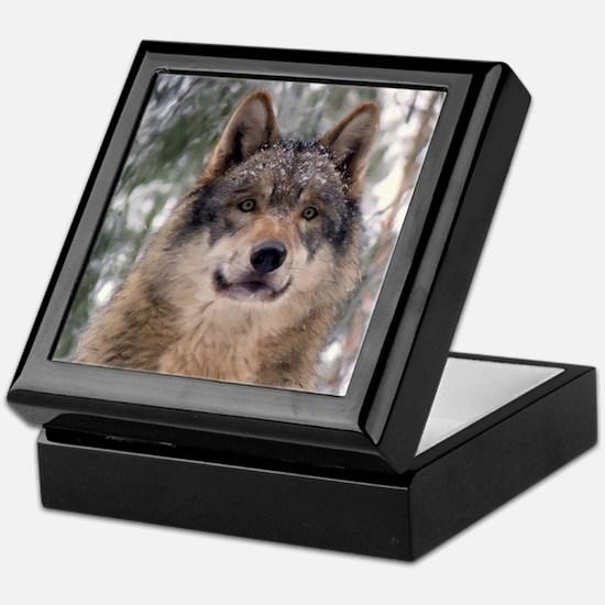 Wolf In Woods Keepsake Box