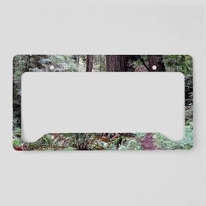 Redwoods Rainforest License Plate Holder