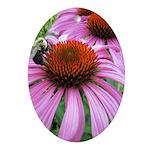 Bumblebee on Purple Illinois Coneflower Oval Ornam