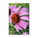 Bumblebee on Purple Illinois Coneflower Posters