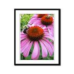 Bumblebee on Purple Illinois Coneflower Framed Pan