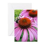 Bumblebee on Purple Illinois Coneflower Greeting C