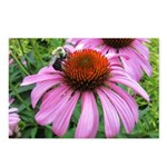 Bumblebee on Purple Illinois Coneflower Postcards