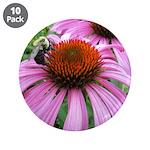 Bumblebee on Purple Illinois Coneflower 3.5