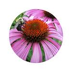 Bumblebee on Purple Illinois Coneflower Button