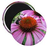 Bumblebee on Purple Illinois Coneflower Magnets