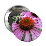 Bumblebee on Purple Illinois Coneflower 2.25
