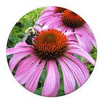 Bumblebee on Purple Illinois Coneflower Round Car