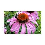 Bumblebee on Purple Illinois Coneflower Rectangle