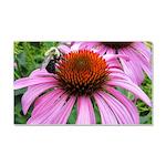 Bumblebee on Purple Illinois Coneflower Car Magnet