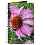 Bumblebee on Purple Illinois Coneflower Journal