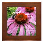 Bumblebee on Purple Illinois Coneflower Framed Til