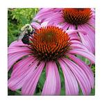 Bumblebee on Purple Illinois Coneflower Tile Coast