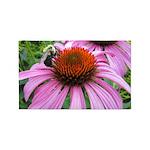 Bumblebee on Purple Illinois Coneflower Area Rug