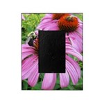 Bumblebee on Purple Illinois Coneflower Picture Fr