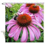 Bumblebee on Purple Illinois Coneflower Shower Cur