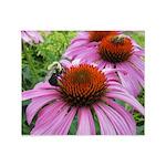 Bumblebee on Purple Illinois Coneflower Throw Blan
