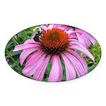 Bumblebee on Purple Illinois Coneflower Sticker