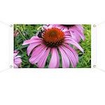 Bumblebee on Purple Illinois Coneflower Banner