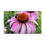 Bumblebee on Purple Illinois Coneflower Wall Decal