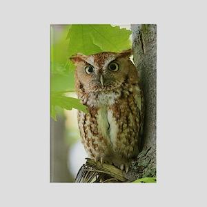 Red Sreech Owl Rectangle Magnet
