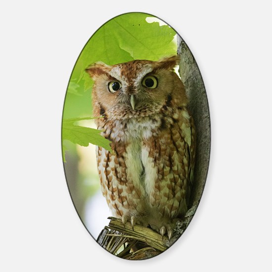 Red Sreech Owl Sticker (Oval)
