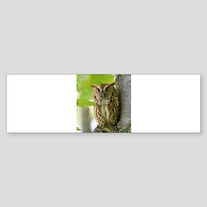 Red Sreech Owl Bumper Sticker