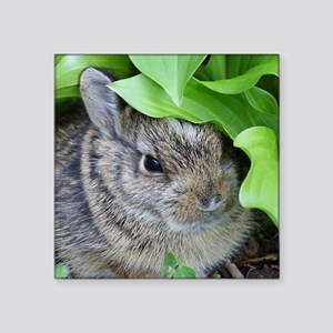 "Baby Bunny Square Sticker 3"" x 3"""
