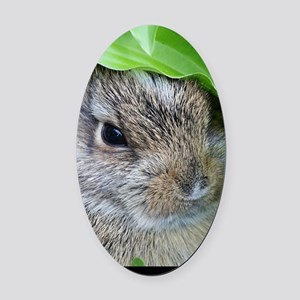 Baby Bunny Oval Car Magnet