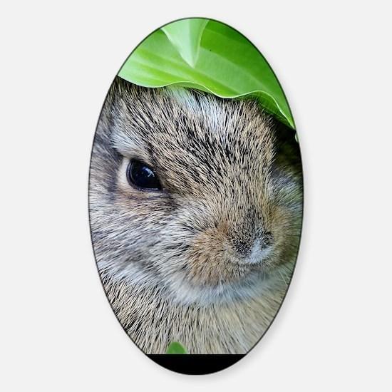Baby Bunny Sticker (Oval)