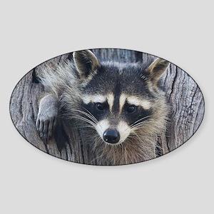 Raccoon in a Tree Sticker (Oval)