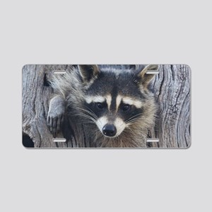 Raccoon in a Tree Aluminum License Plate
