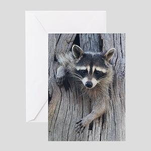 Raccoon in a Tree Greeting Card