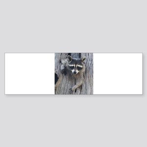 Raccoon in a Tree Bumper Sticker