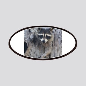 Raccoon in a Tree Patch