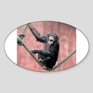Chimpanzee001 Sticker