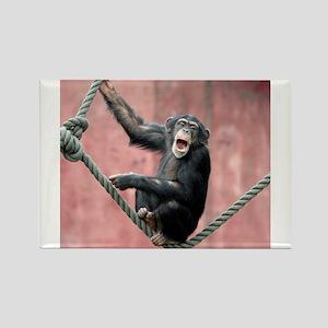 Chimpanzee001 Magnets
