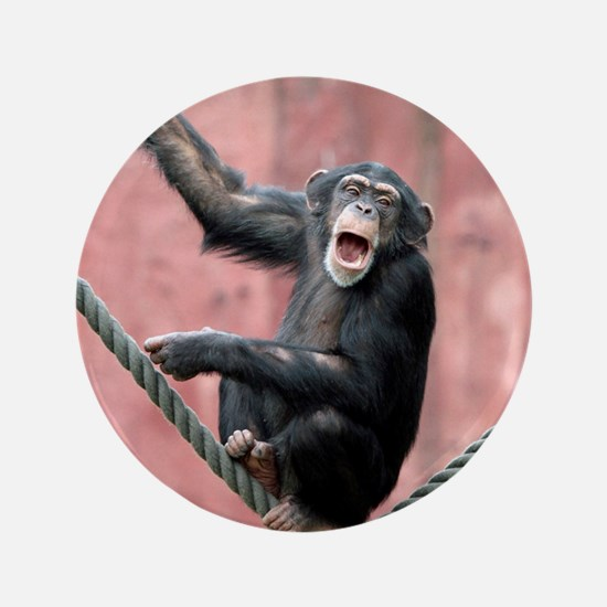"Chimpanzee001 3.5"" Button (100 pack)"
