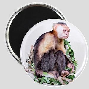 Monkey Business - Magnet
